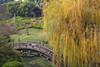 3949Fall16 (Robin Constable Hanson) Tags: japanese bridge gardens horizontal landscapes oriental teahouse willow