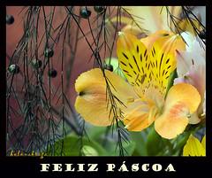 Happy Easter! (helenabraga) Tags: flores brasil easter bravo explore pscoa alstromeria naturesfinest abigfave anawesomeshot colorphotoaward impressedbeauty helenabrga lriodosincas