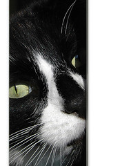 96 - I see you (minxlj) Tags: pet sun cute home window face look animal closeup cat eyes nikon d70 bright gap frame april peek 96 project365 project36596 portrait stitch