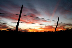 Fenced-in Sunset