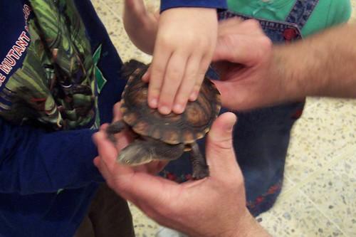 Turtle or tortoise Deepwater Plaza Woy Woy