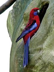 My home is my castle (patries71) Tags: blue red rescue zoo fuji parrot finepix fujifilm nop dierentuin s5600 patries71 papegaaiencentrum parkietenvlucht