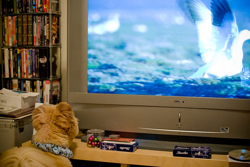 Even dogs watch Planet Earth