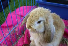 Ukkie (Sjaek) Tags: pet cute rabbit bunny green grass animal outside jump jumping furry sweet sony adorable fluffy running alpha a100 ukkie