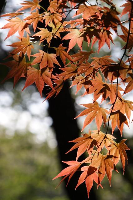 季節はずれの色彩