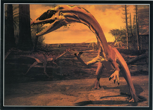 Postcard: COELOPHYSIS!