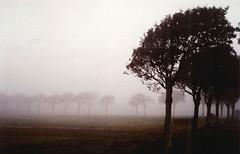 Abendlied/ Evening hymn/ Fog on Föhr / Nebel auf Föhr (amras_de) Tags: autumn mist fall fog analog island nebel searchthebest wind herbst insel nebula northsea parkway ceo frise sis avenue nebbia nordsee soe niebla brouillard friesland schleswigholstein tåke föhr allee før mgla dimma tåge köd nevoeiro boira sumu udu fryslân naturesfinest frisia nebulo magla þoka megla mlha laino hmla migla abigfave autumnineurope irresistiblebeauty fryzja superbmasterpiece goldenphotographer treesubject diamondclassphotographer frisland rukas boirabaixa negghia frísia frizija friisia nèbla