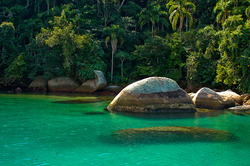Lush Rain Forest and Green Sea