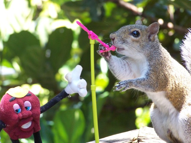 funny squirrel picture