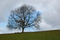 Tree 'catching' the sky
