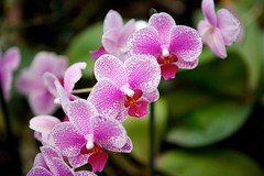 _94I1684.jpg (HW-Photography) Tags: flowers green blossoms colourfull petalsblossombotanicalflowersgreenorchidvioletyellyellow