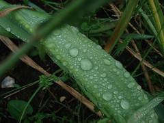 apres pluie (1)