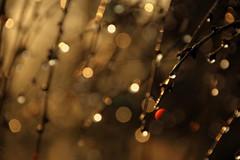 Glimmer (... Arjun) Tags: 15fav usa ny newyork abstract 1025fav america 510fav diamonds nikon dof shine bokeh north d70s twinkle 100v10f longisland sparkle wrong reflect 2550fav 500v50f 50100fav gleam 1000v100f glimmer spark flicker shimmer 2007 glisten 200mm usofa theredmakesit manhasset plandome 18200mmf3556g bluelist 100200fav citylightsatnight 200500fav