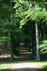 20070519-1552-51 (Geoff Coupe) Tags: netherlands woods gelderland rozendaal