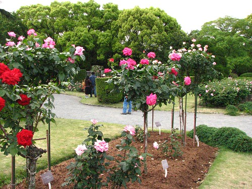 Acharya Jagadish Chandra Bose Indian Botanic Garden_13