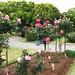 Acharya Jagadish Chandra Bose Indian Botanic Garden_8