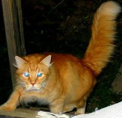 CatDogg (shadowmars64) Tags: chris dog cat meier