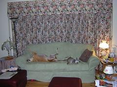 Lounging Pets