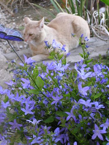 Porch Kitties 03