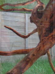 Creepy bogwood picture