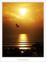 A golden dream (*atrium09) Tags: travel light sunset pordosol sun reflection bird sol beach topf25 landscape atardecer gold topf50 bravo venezuela playa paisaje olympus palm reflexo ih oro thegallery naturesfinest magicdonkey instantfave flickrsbest atrium09 mywinners anawesomeshot aplusphoto 200750plusfaves goldenphotographer goldenphotographer diamondclassphotographer flickrdiamond superhearts rubenseabra