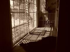 sunlight shining, dog sleep