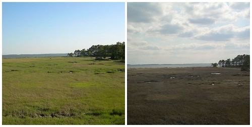 Summer marsh/Winter marsh
