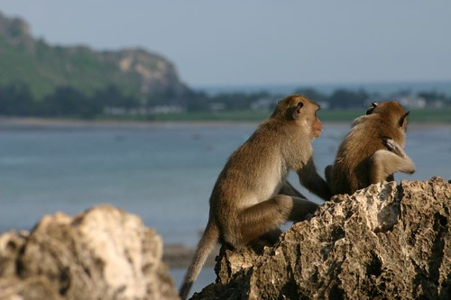 Monkeys in Prachuap Khiri Khan...