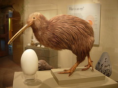 kiwi burd, and egg
