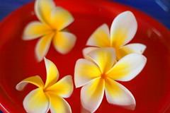 Frangipani Soup (Simon Leonard) Tags: red flower colour simon yellow canon eos 350d australian australia qld queensland frangipani leonard 2007 taipan thetaipan leonarduzzi taipangc simonleonard