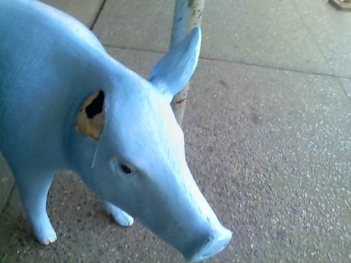 Blue Pig, Interrupted