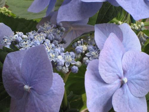Blue in Malibu