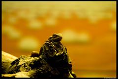 IMG_5802 (irmz) Tags: nature animals canon 350d zoo zoom sydney australia nsw newsouthwales 75300mm 75300 taronga tarongazoo