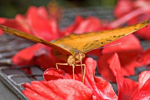 Moth on REd
