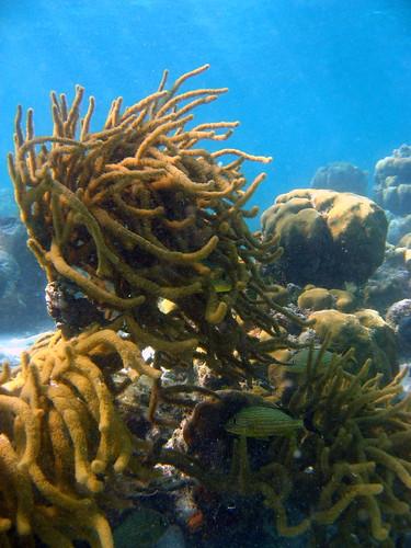 Salamander Hideaway, Ambergris Caye