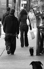 Take 2 - Catwalk (kirstk) Tags: street bw test dog vancouver cat lens granville walk leash lead 70200mm kittyschoice