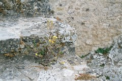 Óbidos, Portugal (grasshoppergirl) Tags: portugal Óbidos