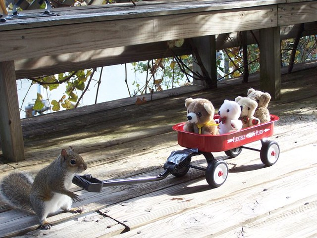 Taking his friends for a ride.