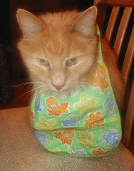 Cat Wearing Bib
