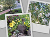 20070508 Styrax Collage