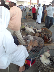 Isa Town Local Market animals (malyousif) Tags: people pets birds animals bahrain trade shady seller crowded cruelty cages seedy uncontrolled isatownlocalmarket gargour