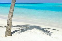 relaxation (muha...) Tags: shadow sea beach water landscape palm relaxation maldives naturesfinest maldiveislands supershot interestingness15 i500 abigfave