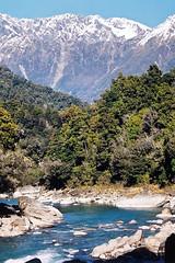 Copland River (Daniel Murray (southnz)) Tags: blue newzealand mountains forest trekking river landscape nationalpark scenery hiking nz southisland westland tramping beech copland welcomeflat southnz diamondclassphotographer eos50escanfromprint