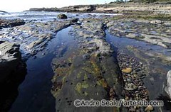 ©Point Lobos 10