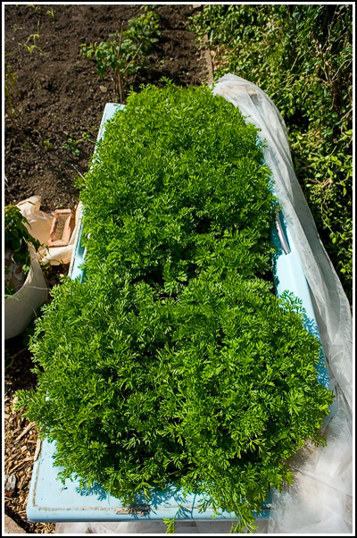 2007-05-20  Allotment - Greenhouse base finished  013 copy