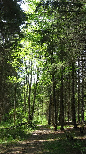 Darker, pine woods.