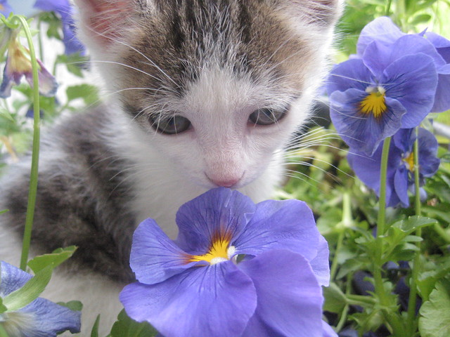 pierre in the pansies