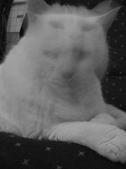 Blurry Cat 2