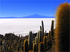 Salar de Uyuni (Danil) Tags: blue cactus sky white mountain southamerica landscape volcano amazing open view desert altitude horizon wide salt surreal bolivia distance salar landschap uyuni supershot satlake superaplus aplusphoto unature superhearts unaturefav favescontestwinner