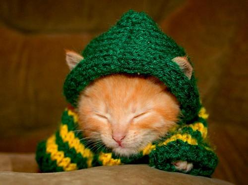 knitting kitteh